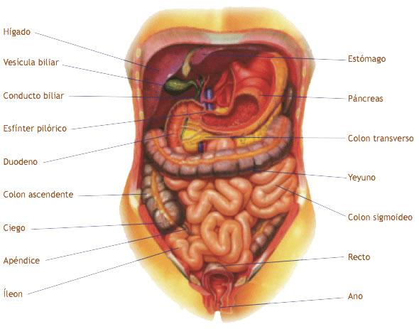 BioTerapias: Sistema Digestivo